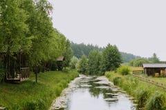 Mooi groen de zomerlandschap met rivier, bos en naaldbomen Royalty-vrije Stock Foto