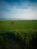 Mooi groen gras en blauwe hemel Stock Afbeeldingen