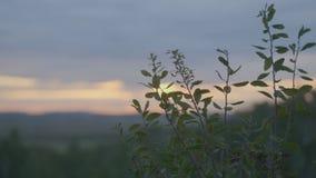 Mooi Groen gras op gebied in ochtend Gebied van gras en zonsonderganghemel Royalty-vrije Stock Foto