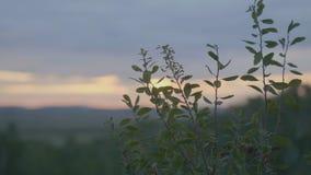 Mooi Groen gras op gebied in ochtend Gebied van gras en zonsonderganghemel Royalty-vrije Stock Afbeelding