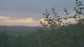 Mooi Groen gras op gebied in ochtend Gebied van gras en zonsonderganghemel Stock Fotografie