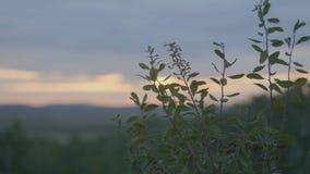 Mooi Groen gras op gebied in ochtend Gebied van gras en zonsonderganghemel Stock Afbeeldingen