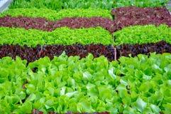Mooi groen huis van Salade in groene en rode kleuren royalty-vrije stock afbeelding
