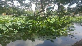 Mooi Groen Lotus met aardige Bloemen stock foto
