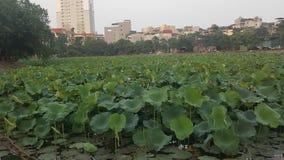 Mooi Groen Lotus met aardige Bloemen royalty-vrije stock afbeeldingen