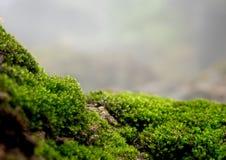 Mooi groen mos op de vloer, mosclose-up, macro Mooie achtergrond van mos voor behang stock foto's