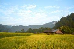 Mooi groen padieveld in Thailand Royalty-vrije Stock Foto's