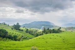 Mooi groen padieveldterras met regenwolk en berg stock afbeelding