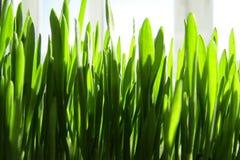 Mooi groen vers gras Royalty-vrije Stock Fotografie