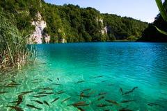 Mooi groenachtig blauw watermeer in plitvice nationale parc Stock Foto's