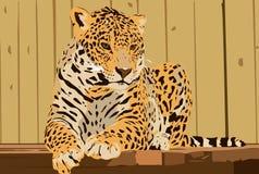 Mooi Groot luipaardportret vector illustratie