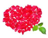 Mooi hart van rode roze die bloemblaadjes op witte achtergrond worden geïsoleerd Stock Afbeeldingen