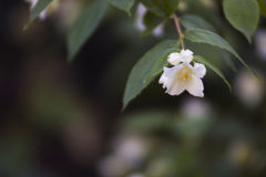 Mooi het bloeien wit bloemclose-up Stock Fotografie