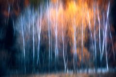 Mooi hout in de herfst stock afbeelding