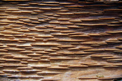Mooi houtsnijwerk Stock Fotografie