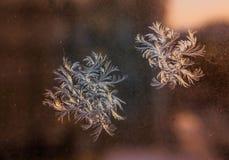 Mooi ijzig natuurlijk patroon op de wintervenster stock foto's