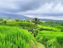 Mooi Indonesië stock foto's