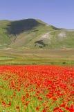 Mooi Italiaans landschap Stock Foto
