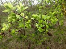 Mooi jong blad en groene aardachtergrond Royalty-vrije Stock Afbeeldingen