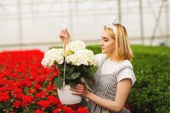 Mooi jong glimlachend meisje, arbeider met bloemen in serre Het conceptenwerk in de serre, bloemen De ruimte van het exemplaar royalty-vrije stock foto's