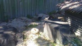 Mooi jong klein konijn met leuke acties in landbouwbedrijf stock videobeelden