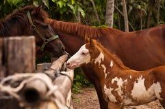 Mooi jong paard Stock Afbeeldingen