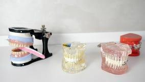 Mooi kaakmodel met tandsteunen die op wit bureau leggen stock video