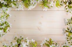 Mooi kader met bloemen van kers, de de Lentezomer Stock Fotografie