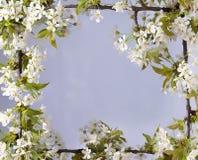Mooi kader met bloemen van kers, de de Lentezomer Royalty-vrije Stock Afbeelding