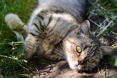 Mooi Kat of Katje die in Gras, OpenluchtSchot liggen Stock Afbeelding