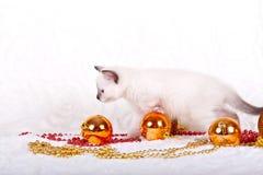 Mooi katje op een witte achtergrond Nieuw jaar Stock Afbeeldingen
