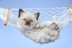 Mooi katje Ragdoll in miniatuurhangmat Royalty-vrije Stock Fotografie