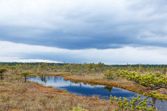 Mooi Klein meer in het Nationale Park van Kemeri, Letland, met een hemelbezinning in waterspiegel Royalty-vrije Stock Foto