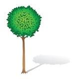 Mooi knipte een boom Royalty-vrije Stock Foto's