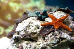 Mooi koraal Stock Afbeeldingen
