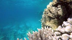 Mooi Koraalrif Het leven in de oceaan stock videobeelden