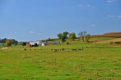 Mooi Landbouwbedrijf in het Platteland Stock Afbeelding