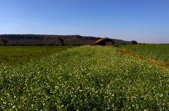 Mooi landbouwgrond en landschap, samarda, Bhopal, India royalty-vrije stock afbeelding