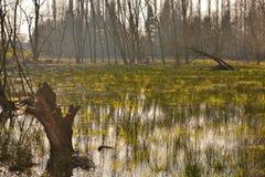 Mooi landelijk Vlaanderen, overstroomde weide stock fotografie