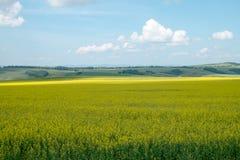 Mooi landschap Royalty-vrije Stock Foto
