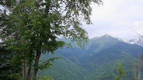 Mooi landschap, bomen in de voorgrond en bergen op de achtergrond stock video