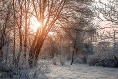 Mooi landschap in de ochtend Royalty-vrije Stock Foto's