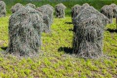 Mooi landschap in de tirolean Alpen, vers ruikend gras i stock fotografie