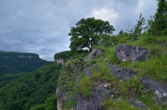 Mooi landschap in een bergvallei De zomer groen gebladerte o stock foto's