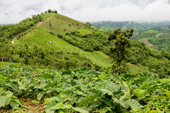Mooi Landschap en Bergvalleilandbouwbedrijf Stock Foto