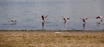 Mooi landschap en bezinning in zout meer in Turkije stock foto
