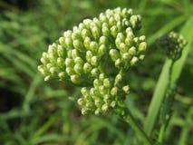 Mooi Landschap, groen gras, bloem Stock Foto
