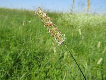 Mooi landschap, groen gras, gebied Stock Fotografie