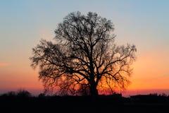 Mooi landschap met bomensilhouet Royalty-vrije Stock Foto