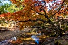 Mooi landschap met de oranje esdoorn in de herfstseizoen Royalty-vrije Stock Afbeeldingen